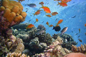 wiele gatunków ryb