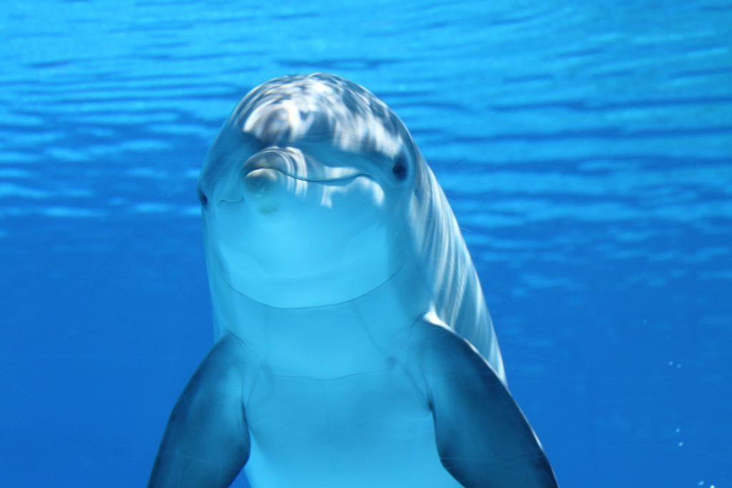 wyjazdy nurkowe to możliwość spotkanie delfina