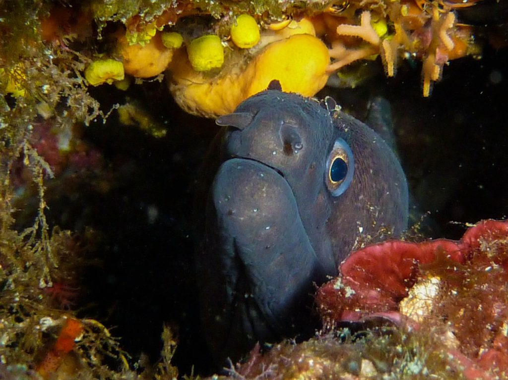 moray diving