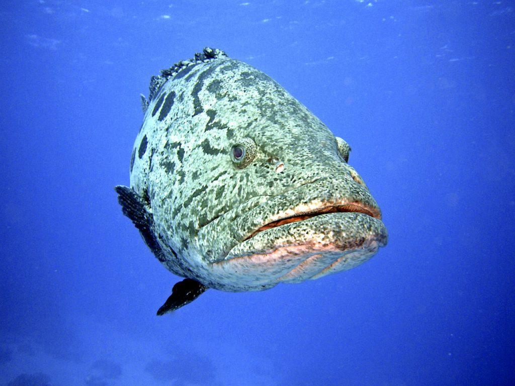 wyjazd nurkowy duża ryba