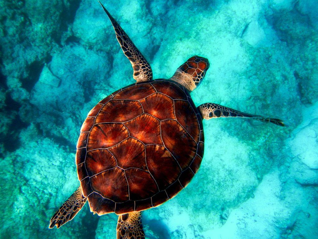 wyjazd nurkowy poznań oraz żółw
