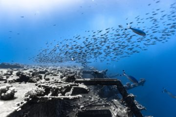 Salem Express wrak ryby